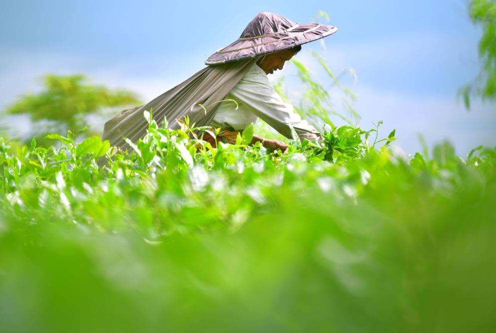 """茶,让我们在一起——首个""""国际茶日""""万里茶道系列活动开启"""